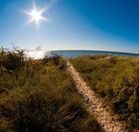 Path through the dunes at falster