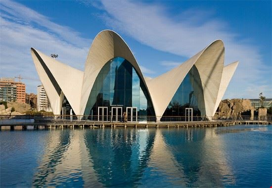 Cosa fare a Valencia: oceanografico