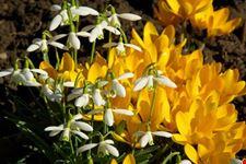 linz botanischer garten