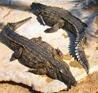 djerba riserva coccodrilli-djerba explore