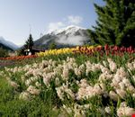 Davos in Spring