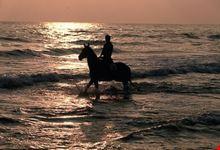 Equitazione nel Parco del Delta del Po