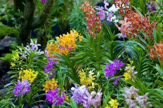 33076 malaga jardin botanico