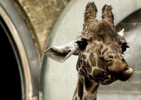 33640 london zoo