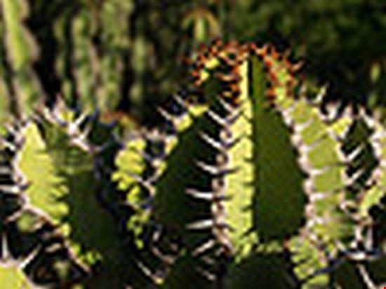 33680 windhoek nat botanical gardenscactus