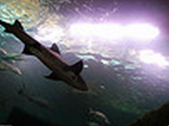 Nat Marine Aquarium shark