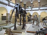Palaontologisches Museum Munich