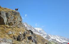 parco nazionale del gran paradiso torino