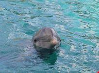 sharm el sheikh dolphinella in sharm el sheikh