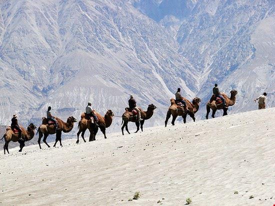 sharm el sheikh camel riding