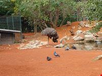 zagreb straussen im zoo zagreb