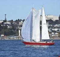 Segelsport in Auckland