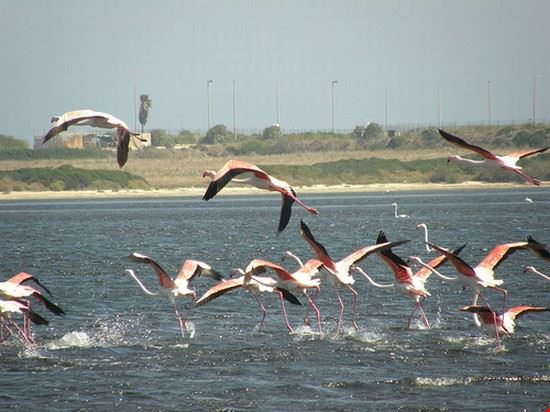 35323 cagliari flamingos