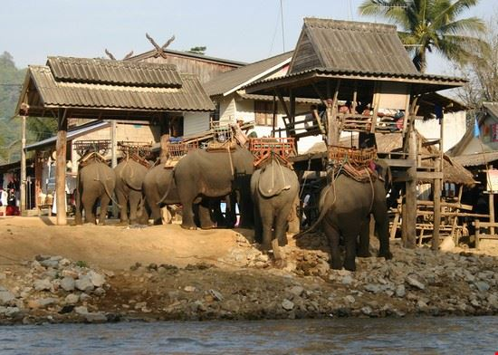 chiang rai elefanten und touristen