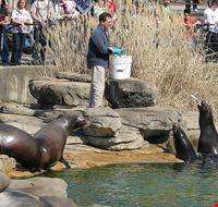 36068 saint louis st louis zoo