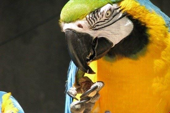 Bird Kingdom at Niagara Falls Aviary