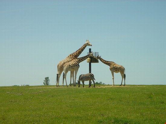 36720 nairobi nairobi safari