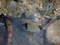 Pesci in cerca di cibo