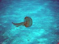 Piccola medusa