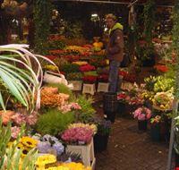 37846 mercato dei fiori amsterdam