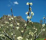 Bargone-Monte Tregin