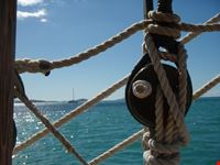 sailing the whitsundays cairns