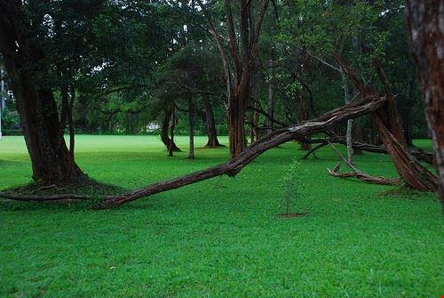 Botanic Garden Nairobi