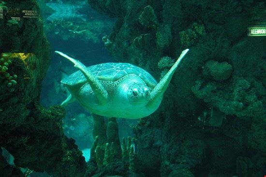 38330 genua aquarium schildkroete