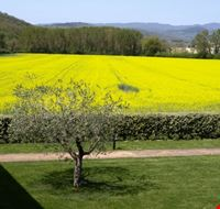 campo di colza perugia