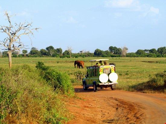 the elephant malindi