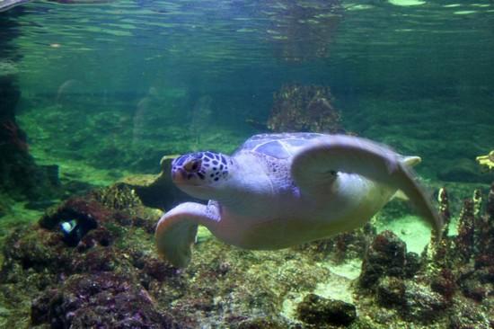 Foto tartaruga all 39 acquario a genova 550x366 autore for Accessori acquario tartarughe