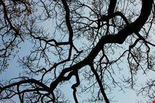 l albero della vita garda