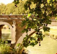 38940 ponte sull isola tiberina roma