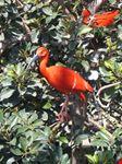ibis sacro valencia