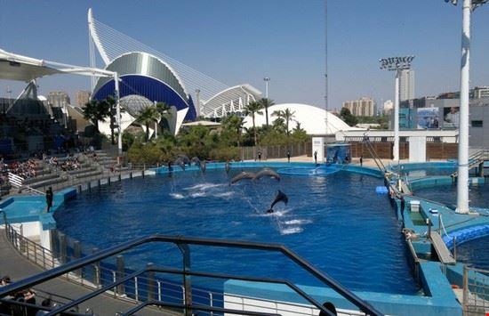 39015 lo spettacolo dei delfini valencia