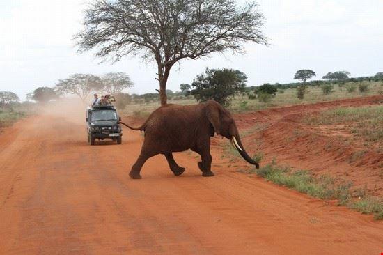39845 safari watamu