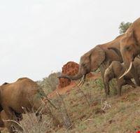 39848 safari watamu