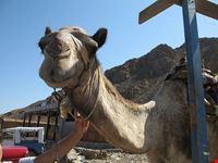 dahab kamel dahab