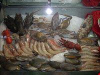 pesce fresco appena pescato