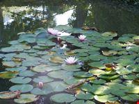 flora del garda gardone riviera