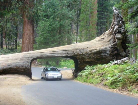 un passaggio particolare sequoia national park