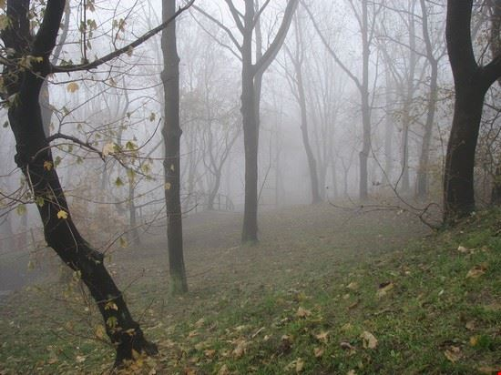 40415 budapest foggy forest