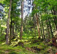 Foresta del Cansiglio nei pressi di Piancavallo