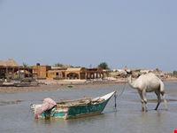 nuweiba kamelboot