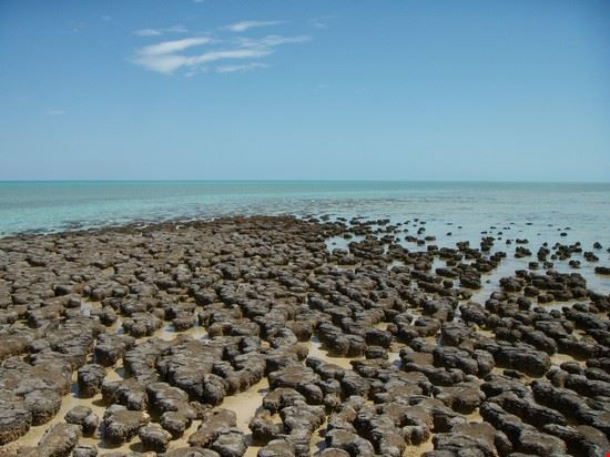 https://images.placesonline.com/photos/40780_stromatoliti_perth.jpg?quality=80&w=710&h=510&mode=crop