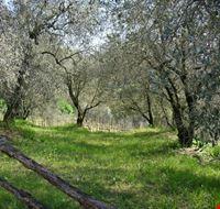 Uliveto in Arquà Petrarca