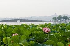 hangzhou lotus westlake 8