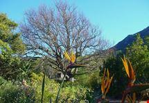 i giardini di kirstenbosh citta del capo