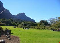 vista dei giardini a kirstenbosh citta del capo