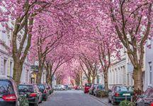 Heerstrasse, il Viale dei Ciliegi